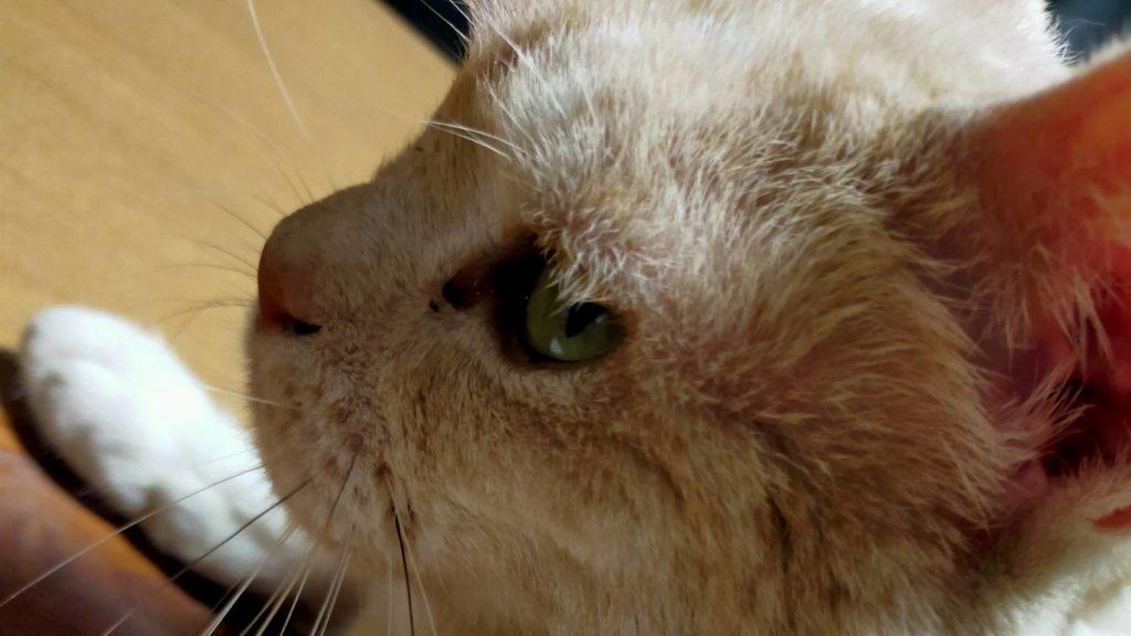 案内猫マーシャ